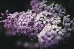 Frühlingsblumen in einem Garten Lizenzfreie Stockfotos
