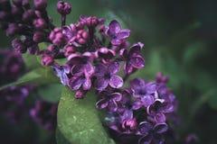 Frühlingsblumen in einem Garten Lizenzfreies Stockbild