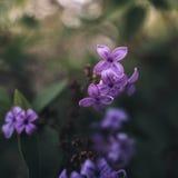 Frühlingsblumen in einem Garten Stockbilder
