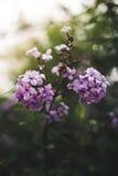 Frühlingsblumen in einem Garten Stockbild