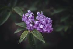 Frühlingsblumen in einem Garten Stockfotos