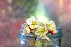 Frühlingsblumen in einem Glasvase stockbilder