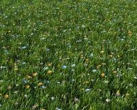 Frühlingsblumen in einer Wiese stock abbildung