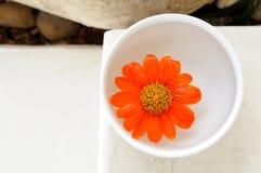 Frühlingsblumen für Badekurort und aromatherapy Stockfotos