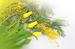 Frühlingsblumen für Muttertag Lizenzfreie Stockbilder