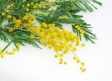 Frühlingsblumen für Muttertag Stockfoto