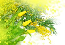 Frühlingsblumen für Muttertag Stockfotos