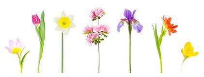 Frühlingsblumen getrennt auf Weiß Stockfotografie