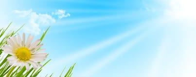 Frühlingsblumen-, -gras- und -sonnehintergrund Stockfotografie