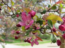 Frühlingsblumen im Baum Lizenzfreie Stockfotos