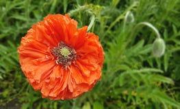 Frühlingsblumen im botanischen Garten Lizenzfreies Stockfoto