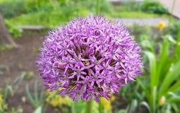 Frühlingsblumen im botanischen Garten Stockbilder