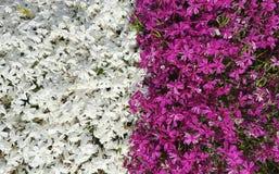 Frühlingsblumen im botanischen Garten Stockfoto