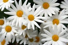 Frühlingsblumen im Garten 1 Stockfotografie