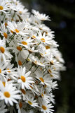 Frühlingsblumen im Garten 1 Stockbilder