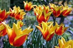Frühlingsblumen im Garten 1 Lizenzfreies Stockfoto