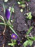 Frühlingsblumen im Garten 1 Lizenzfreie Stockfotos