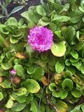 Frühlingsblumen im Garten 2 Lizenzfreie Stockbilder