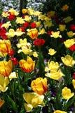 Frühlingsblumen im Garten 2 Stockfotos