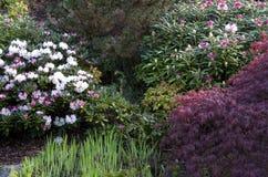 Frühlingsblumen im Garten Stockfotografie