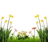 Frühlingsblumen im Garten Lizenzfreies Stockfoto