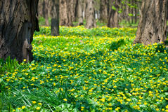 Frühlingsblumen im Park Stockfotografie