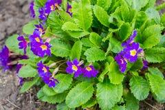 Frühlingsblumen im Park stockfotos
