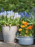 Frühlingsblumen im Topf Stockbilder