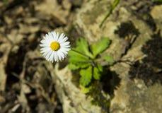 Frühlingsblumen im Wald Lizenzfreie Stockfotos