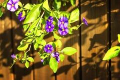 Frühlingsblumen in Israel Stockbilder