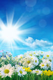 Frühlingsblumen mit blauem Himmel Stockbilder