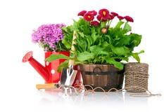 Frühlingsblumen mit Gartenhilfsmitteln Stockbild