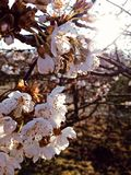 Frühlingsblumen morgens blühend hell stockbilder