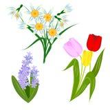 Frühlingsblumen, -narzissen, -tulpen und -hyazinthen Stockfoto