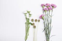 Frühlingsblumen, -nelken und -butterblumeen Lizenzfreies Stockfoto