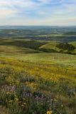 Frühlingsblumen in Ost-Staat Washington Lizenzfreie Stockfotografie