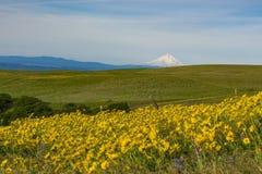 Frühlingsblumen in Ost-Staat Washington Lizenzfreies Stockfoto