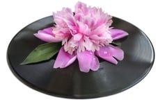 Frühlingsblumen-Rosapfingstrose mit Wasser fällt auf es auf schwarzer Vinylaufzeichnung Lizenzfreies Stockbild