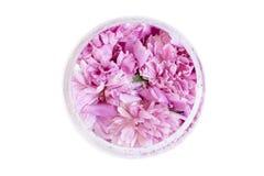 Frühlingsblumen-Rosapfingstrose mit Wasser fällt in Vase auf ihm Stockfoto