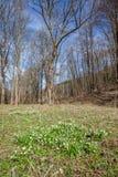 Frühlingsblumen, Schneeflocke Lizenzfreie Stockbilder