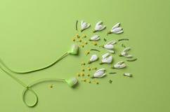 Frühlingsblumen, -Schneeglöckchen und -mimose als Ton von den Kopfhörern auf einem grünen Hintergrund Lizenzfreies Stockfoto