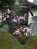 Frühlingsblumen in Tokyo Stockfoto