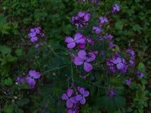 Frühlingsblumen und -blätter im Garten stockbilder