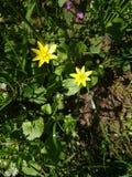 Frühlingsblumen und -blätter im Garten Lizenzfreies Stockfoto