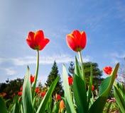 Frühlingsblumen und frische Blätter mit Tageslicht Lizenzfreie Stockbilder