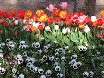 Frühlingsblumen von Istanbul Stockfoto