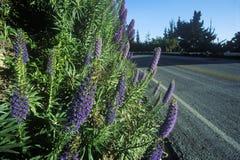 Frühlingsblumen, Weg 1, CA lizenzfreie stockfotos