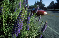 Frühlingsblumen, Weg 1, CA stockbilder