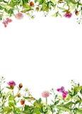 Frühlingsblumen, Wiesengras, Schmetterlinge Rosafarbener Blumenrand Aquarellkarte, leer Lizenzfreie Stockfotografie