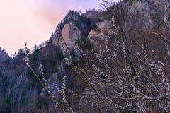 Frühlingsblumenberge stockbild